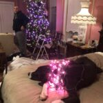 Will and Clifton took a break from the Oaklands to help Norman decorate his pink